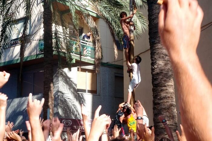 people climbing poles to get ham in tomatina