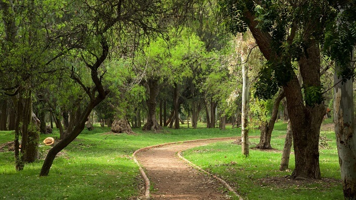 take a stroll through san luis park in bunol