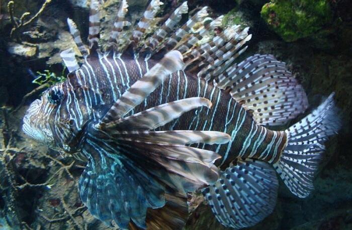The Madrid Zoo Aquarium