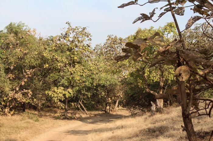 Visit tribal settlements in the park