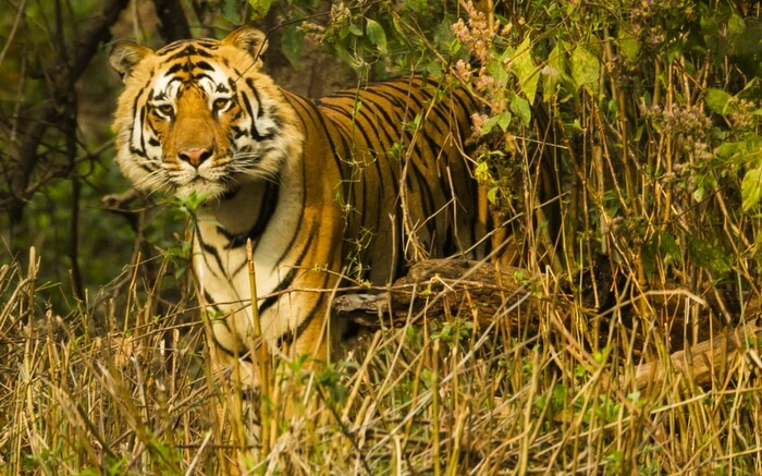 acj-2208-kanha-national-park (1)