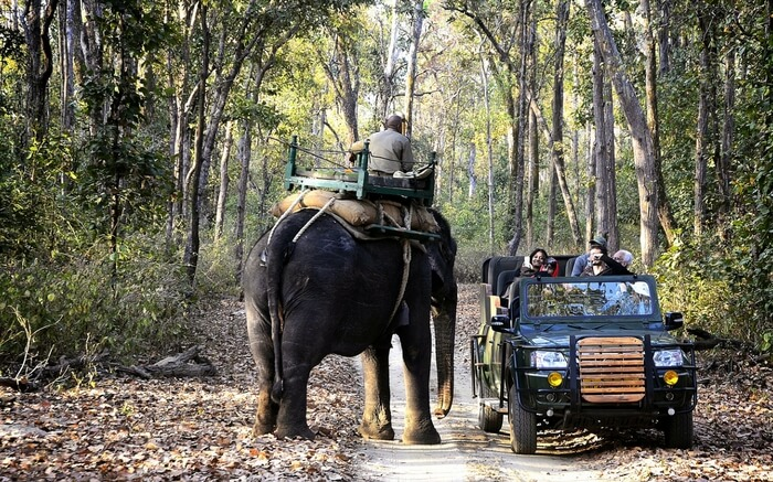 acj-2208-kanha-national-park (13)