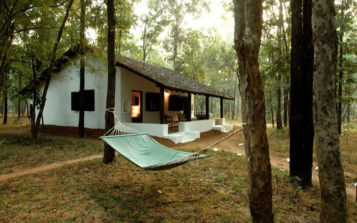 acj-2208-kanha-national-park (4)