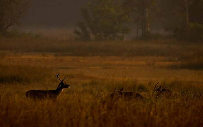 acj-2208-kanha-national-park (6)