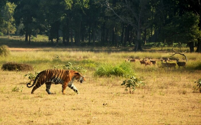 acj-2208-kanha-national-park