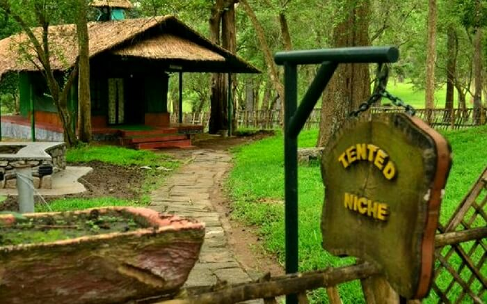 acj-2908-parambikulam-tiger-reserve-