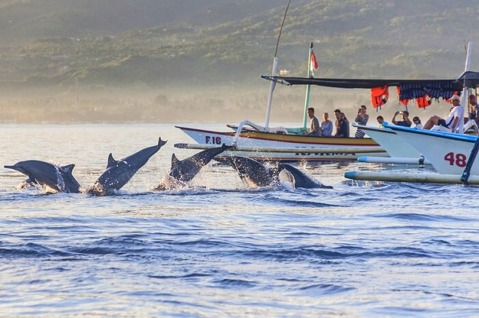 spot dolphins at Lovina beach