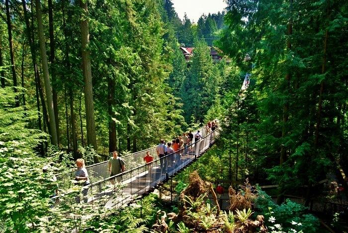 canada suspension bridge cliff walk