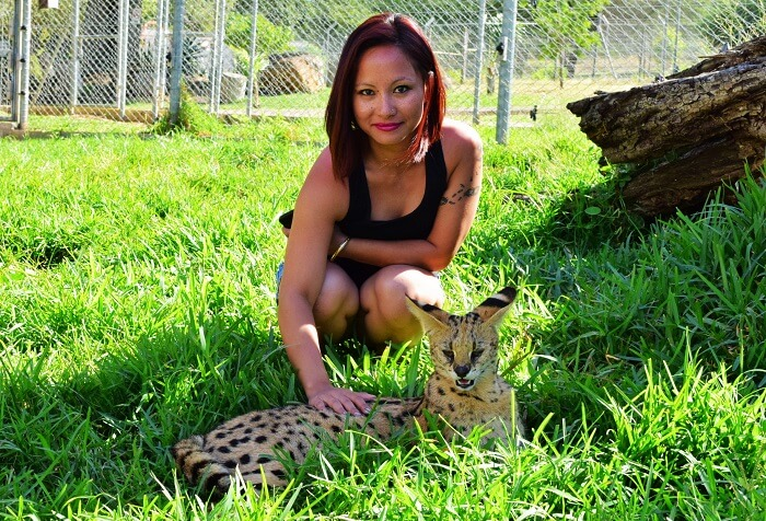 Serval cats in Mauritius