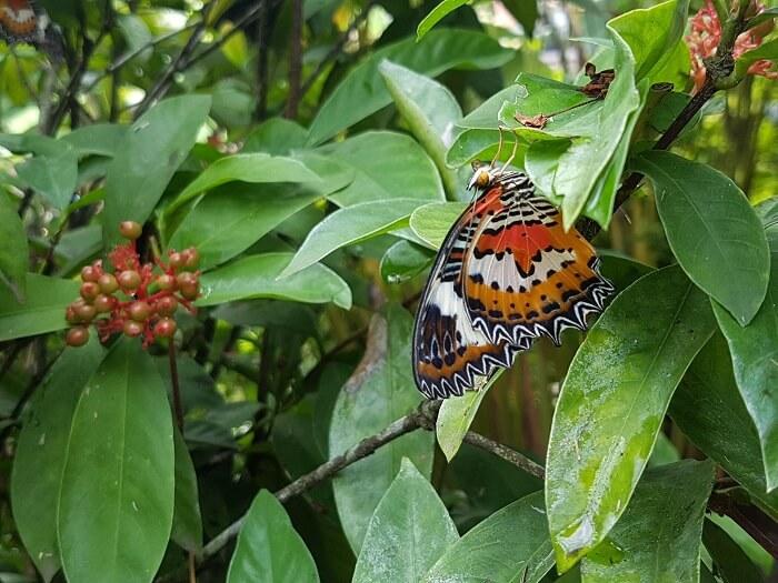 butterfly park in bali