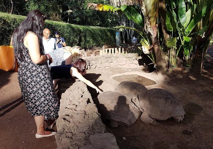 Turtle Farm, Mauritius
