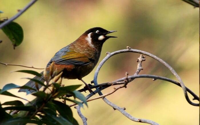 A bird sitting on a branch in Eaglenest Wildlife Sanctuary in Arunachal Pradesh