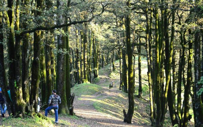 A traveler resting in woods during his trek to Hatu Peak