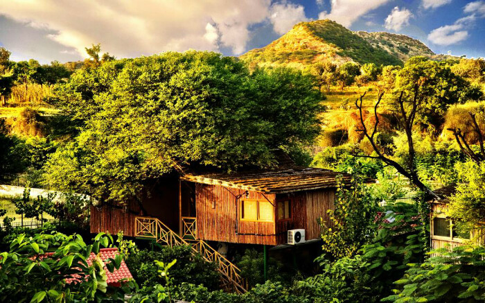 A view of Treehouse Jaipur in Rajasthan