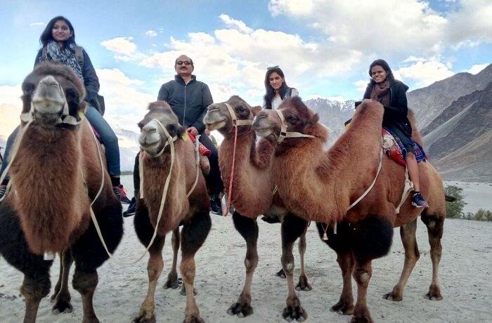 bactrian camel ride ladakh