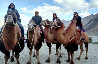 Camel Ride In Ladakh