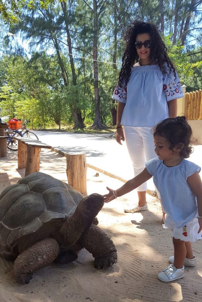 Giant wild aldabra tortoise in seychelles