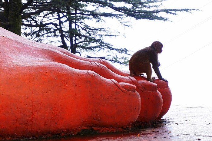 Jakhu Temple monkey sitting on huge Hanuman statue