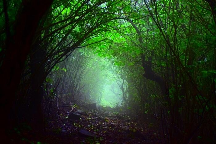 dense forests inside bhimashankar