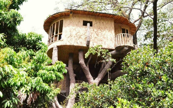 Treehouse view in the Den Corbett in Ramnagar