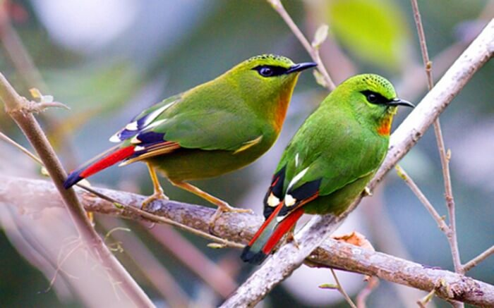 Two birds sitting on the branch of a tree in Eaglenest Wildlife Sanctuary