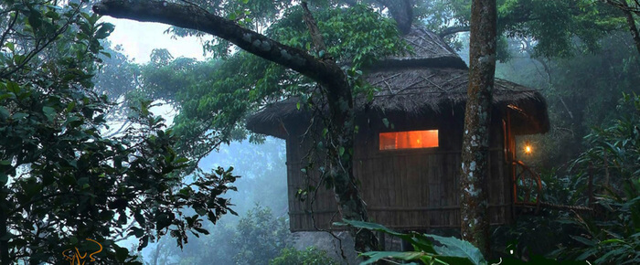Vanya Tree House