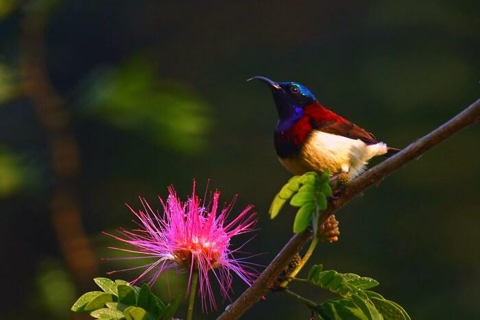 spot sunbirds at bhimashankar