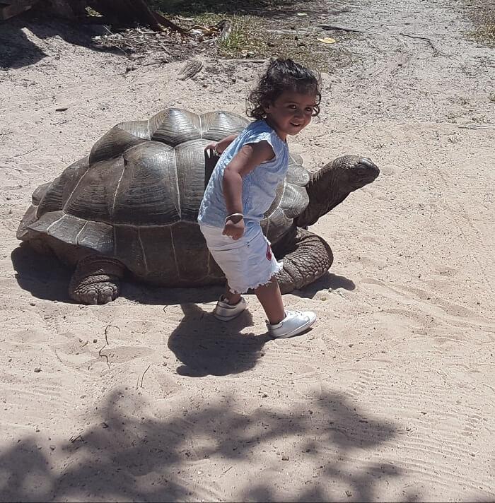 tortoise spotting in seychelles