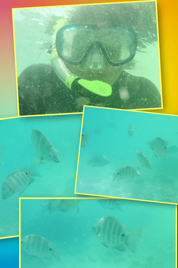 snorkeling activity in the seychelles