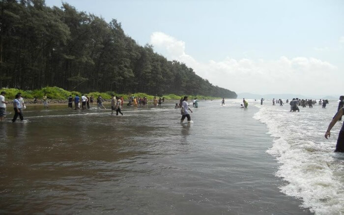people enjoying at a beach during low tides
