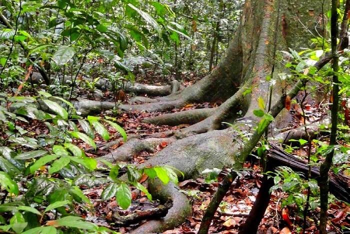 the sacred groves in bhimashankar