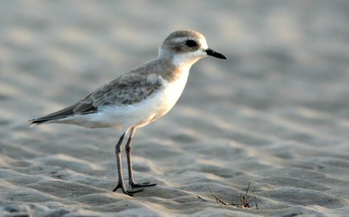 small bird on a beach in Alibaug