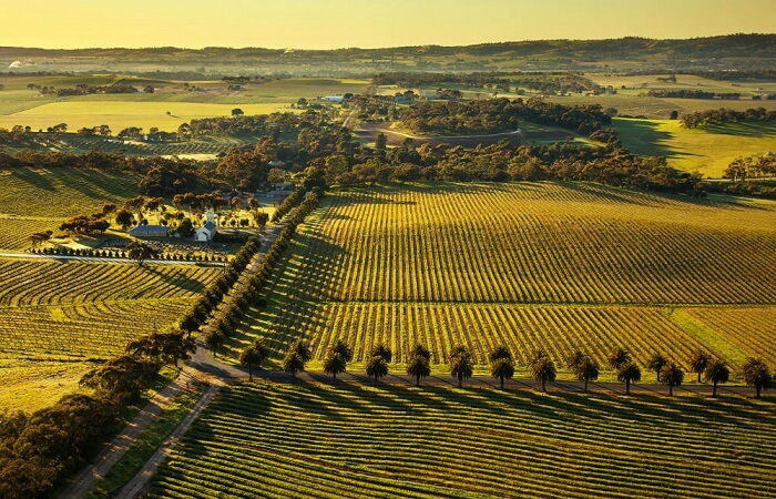 Seppeltsfield Road Barossa Valley