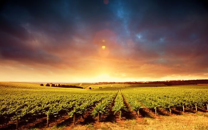 best time to visit Barossa valley