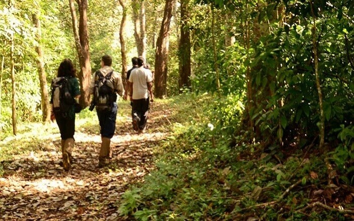 A people hiking through a jungle