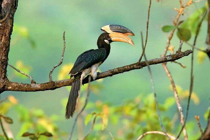 visit Anshi National Park in dandeli