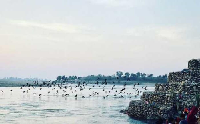 Birds flying past a water body in Neel Dhara Pakshi Vihar in Haridwar