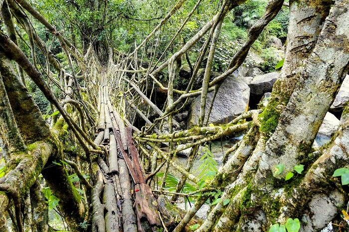 root bridge in meghalaya