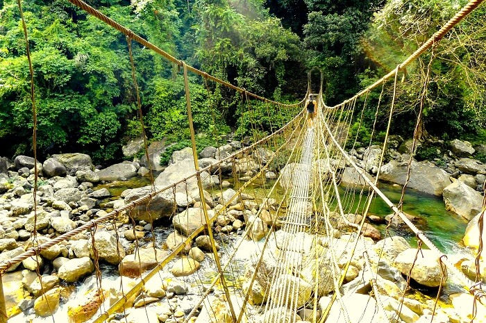 forest bridge in meghalaya