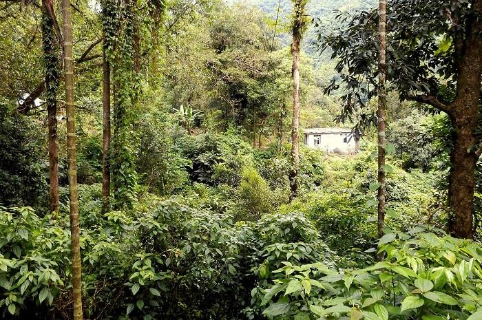 greenery in meghalaya