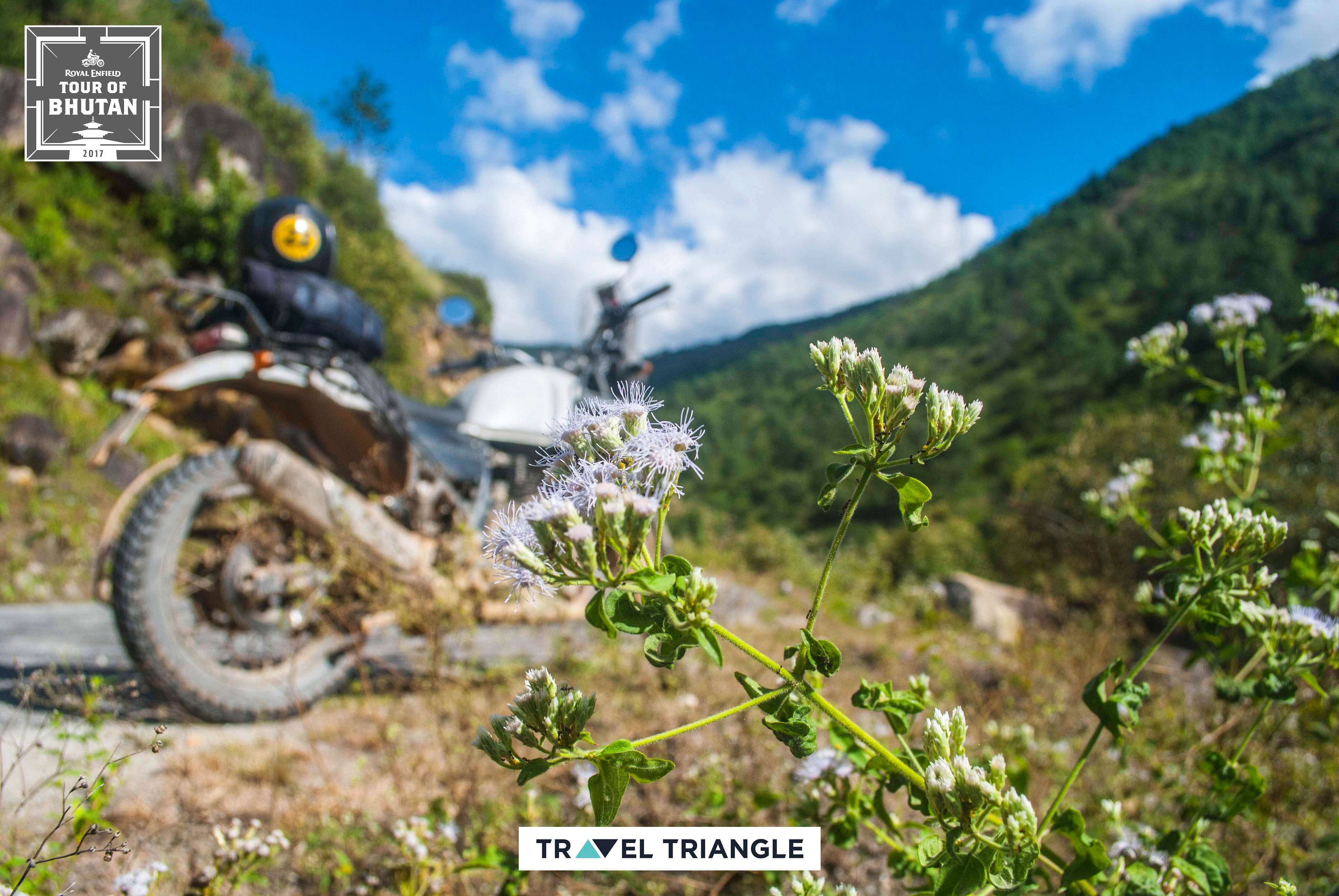 royal enfield india bhutan road trip: a bike amid flower fields