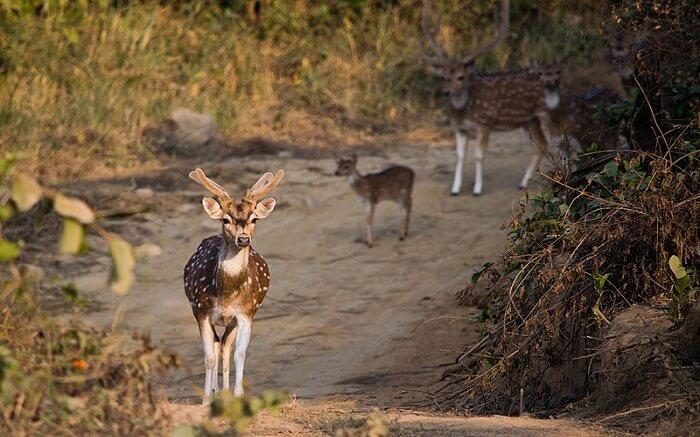 Deers in a wildlife park