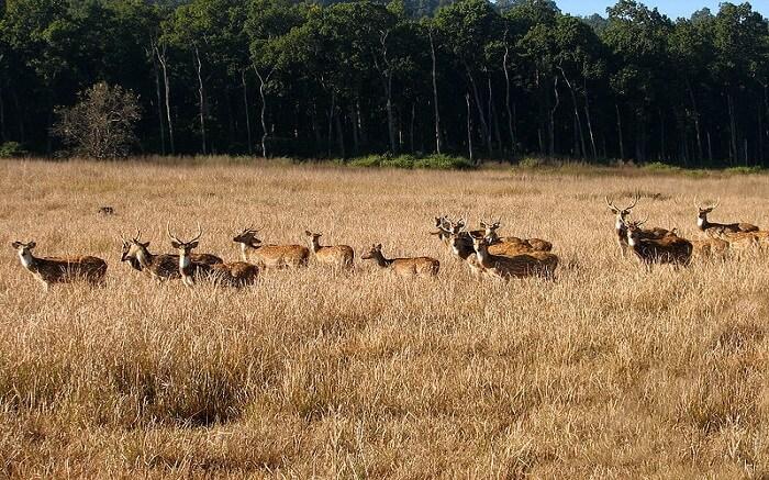 Deers in a wildlife sanctuary
