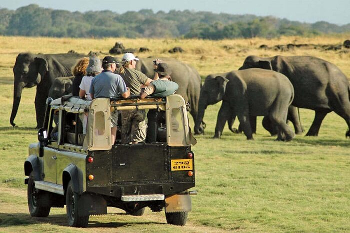 Go on an adventurous safari