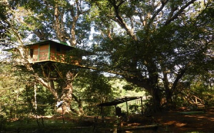 10 Dandeli Resorts For That Dreamy Stay Amidst Woods