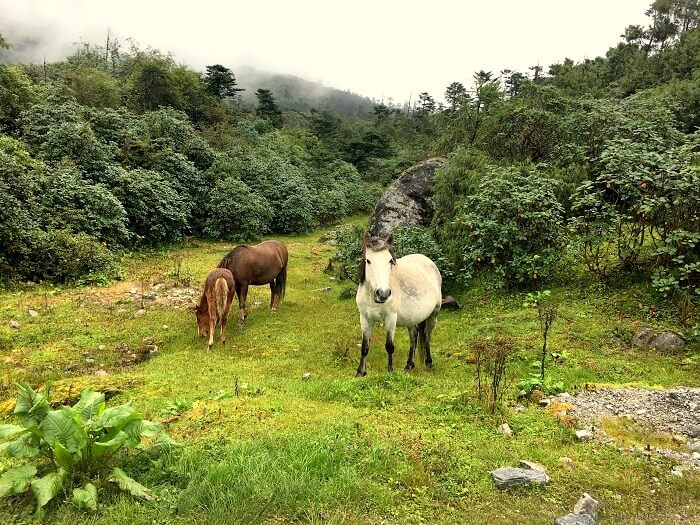 animals in sikkim