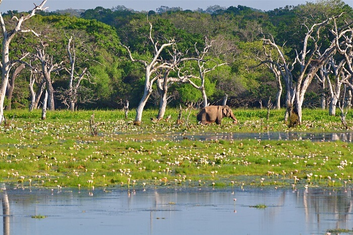 Ideal Duration Of A Trip To Yala National Park