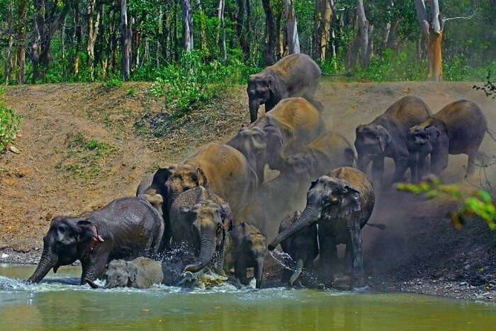 spot tigers and elephants at Rajaji National Park