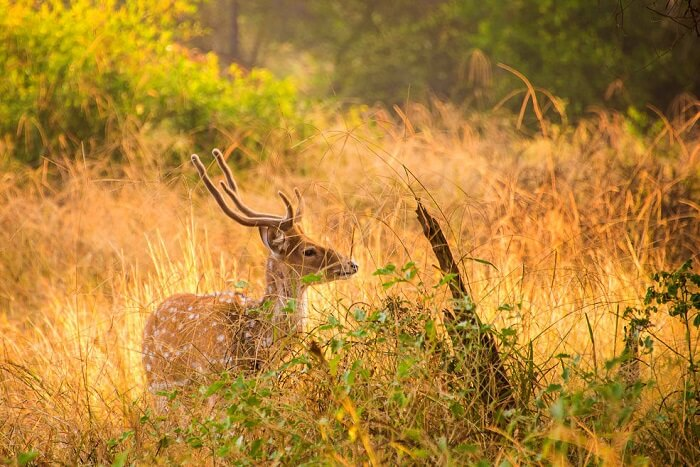 Sariska National Park Timings