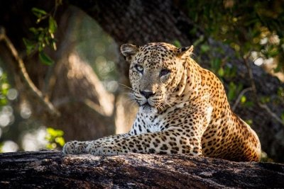 Traveler Reviews for Yala National Park